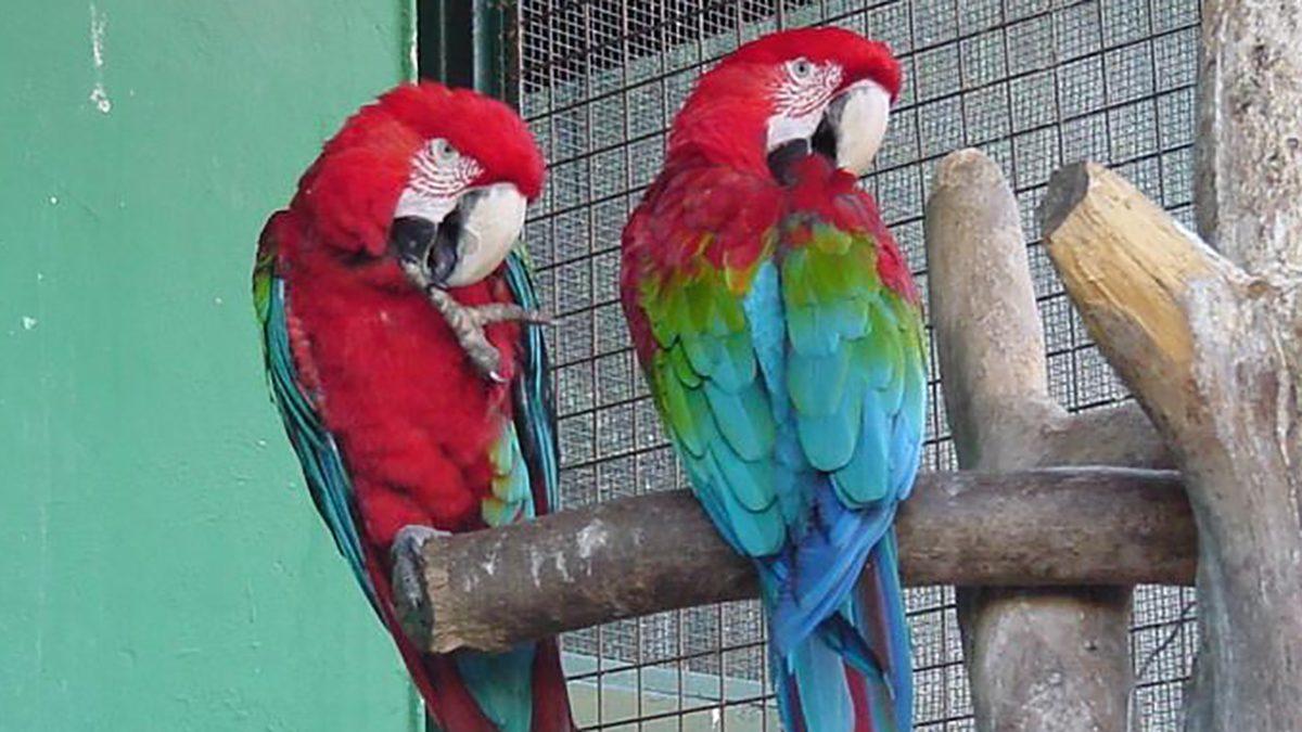 Guacamayos rojos en Loro Sexi de Almuñécar.